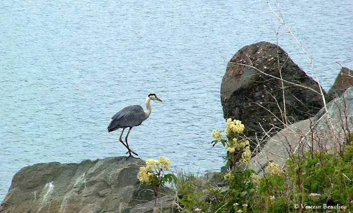 Site ornithologique